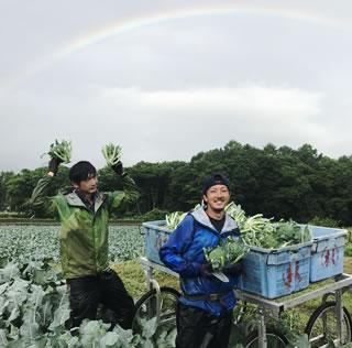 収穫作業2